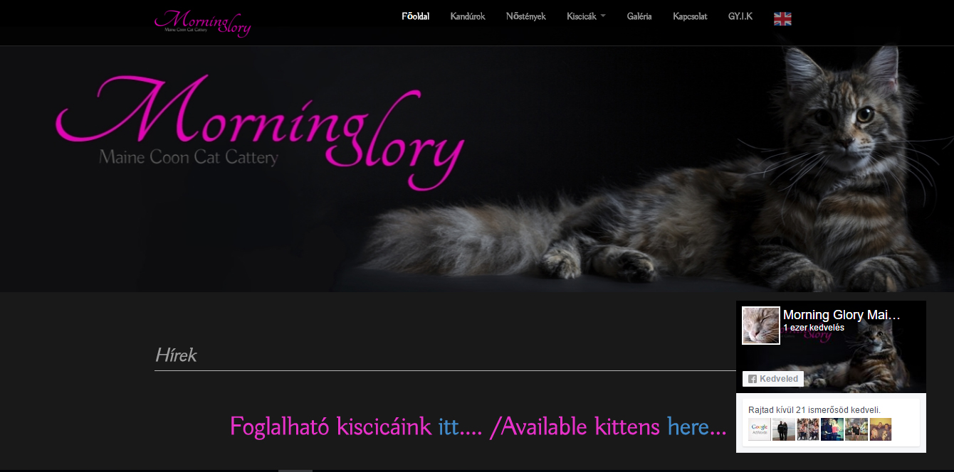 morningglorymainecoon.com